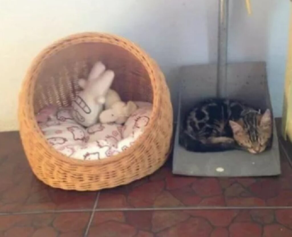 gatto dorme sopra paletta