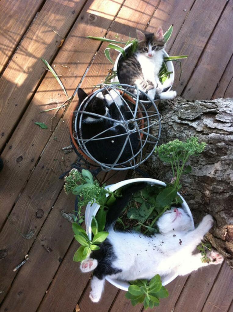 gattini dolci relax
