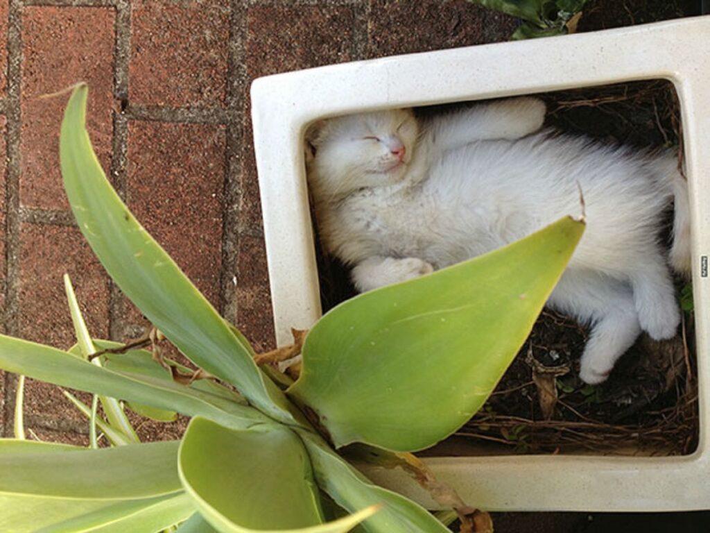 gatto bianco adorabile