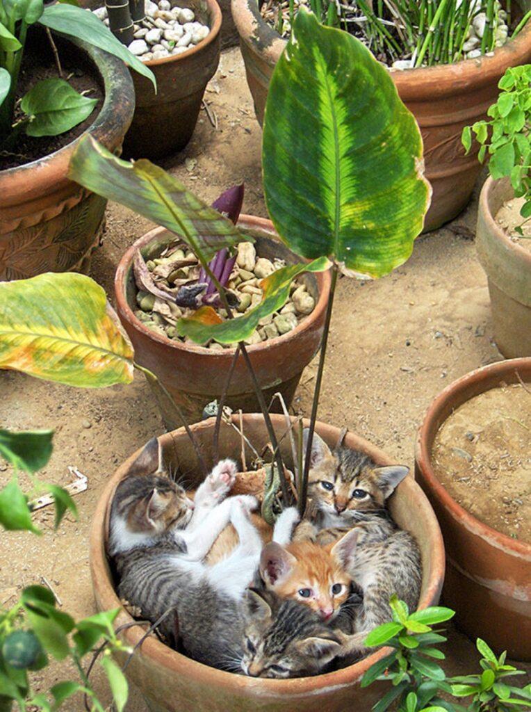 gattini insieme vaso