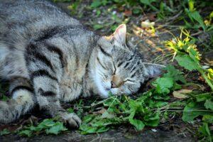 gatto dorme natura