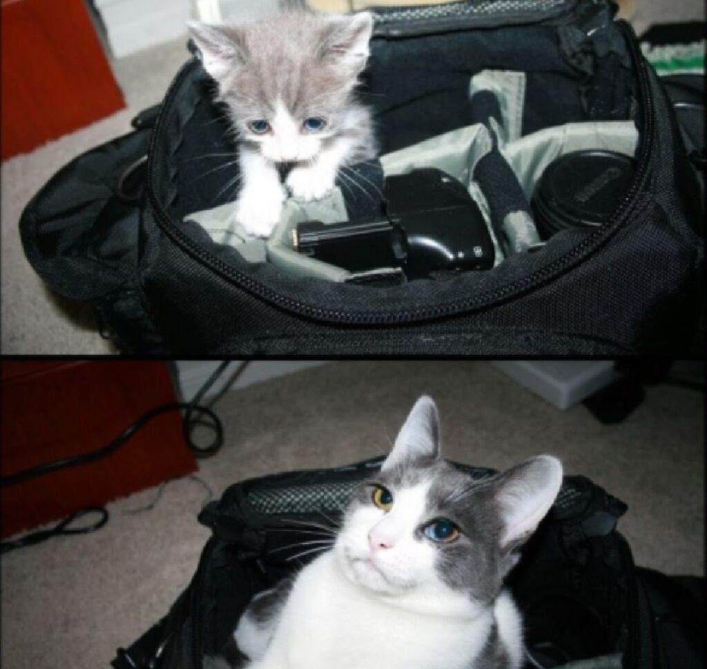 gatto dentro borsone nero