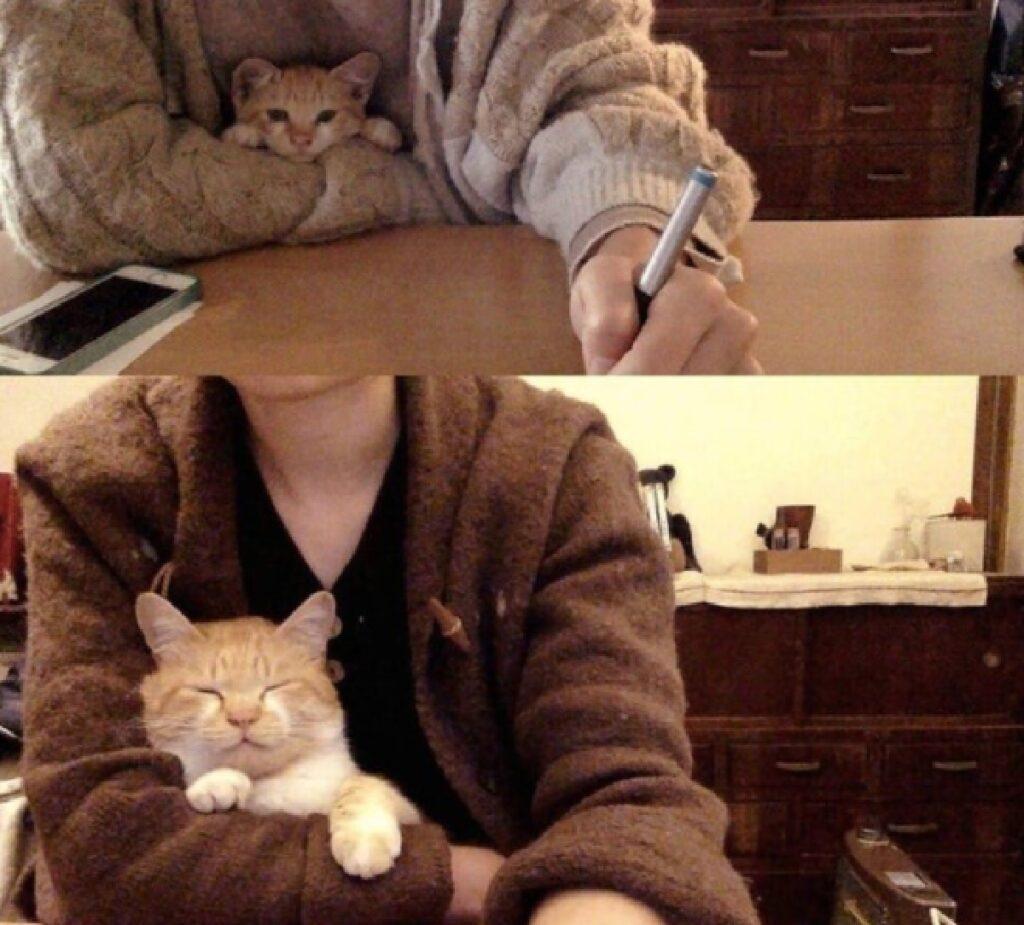 gatto in braccia mamma