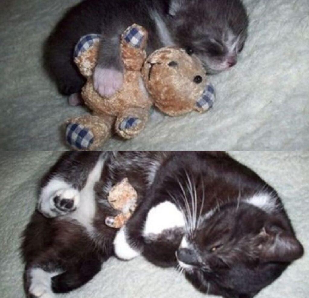 gatto stesso giocattolo fin da piccolo