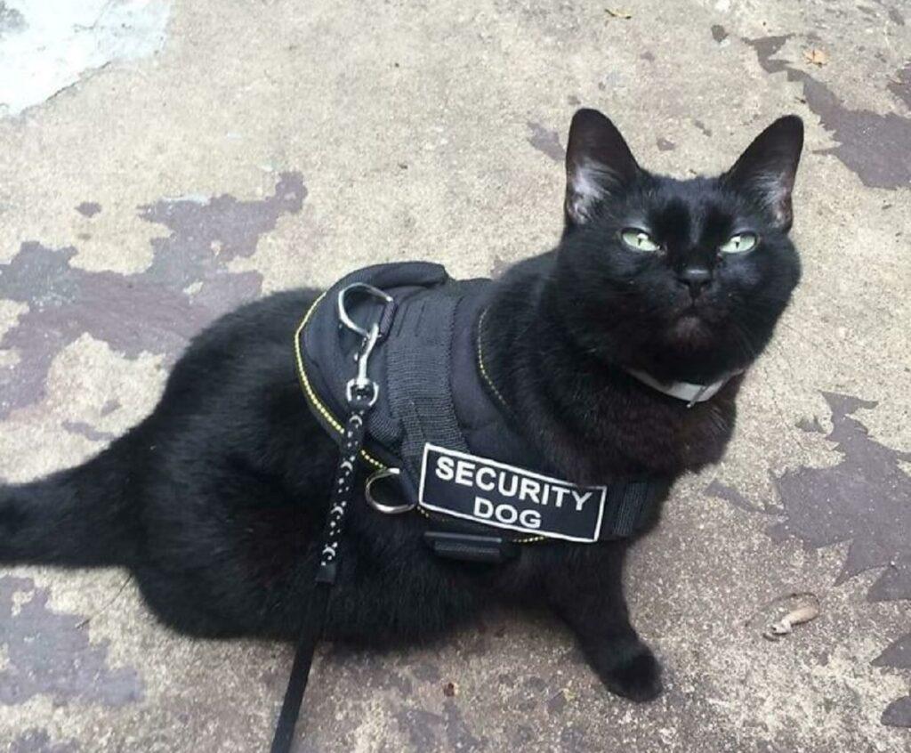 micio nero sicurezza