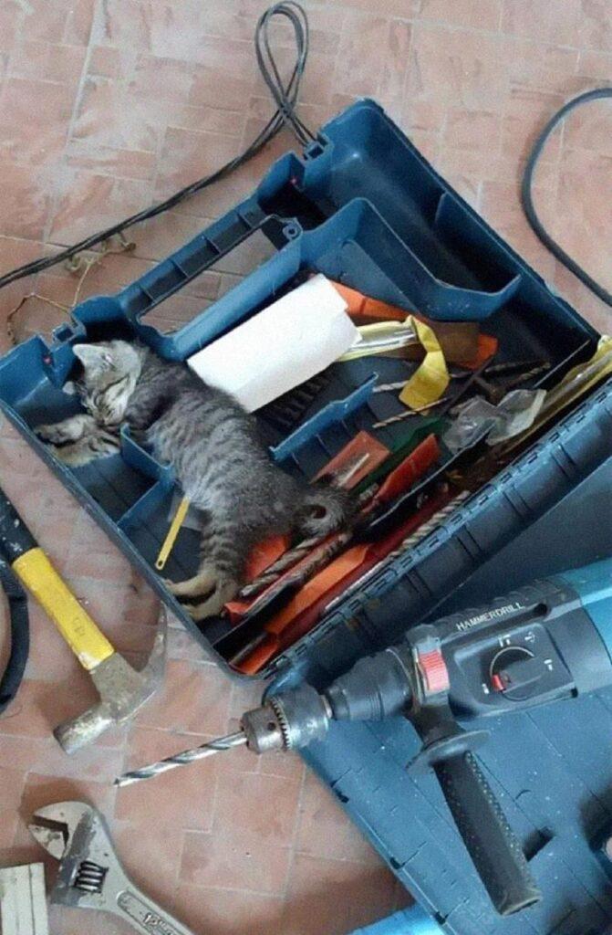 gattino dorme valigetta