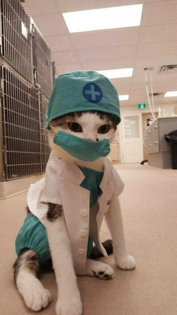 gatto dottore mascherina