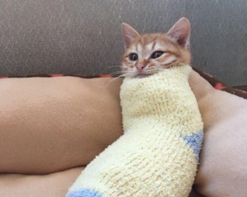 gatto come fagottino coperte
