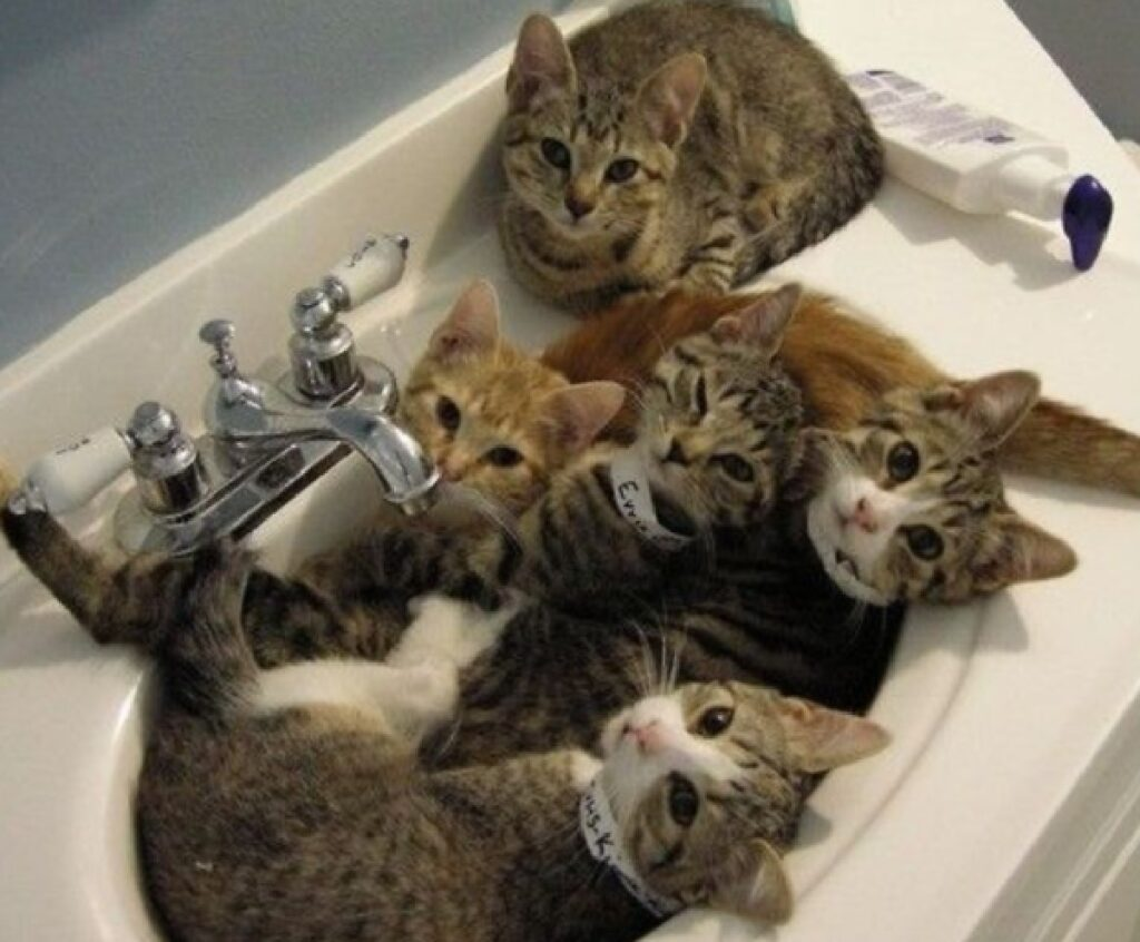 gattini dentro lavandino bagno