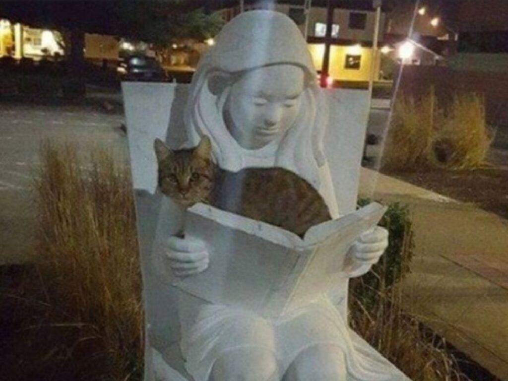 gatto libro statua ragazzina