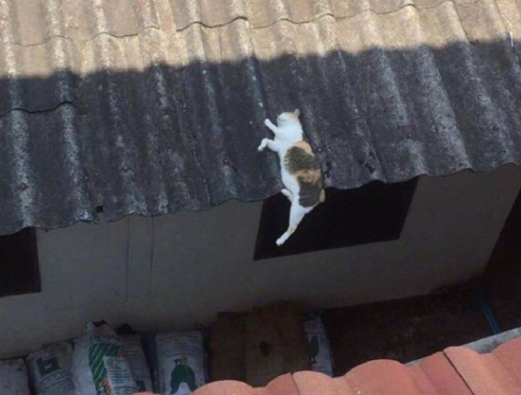 gatto dorme pericolante tetto
