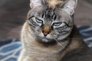 foto di gatti con aspetto più strano