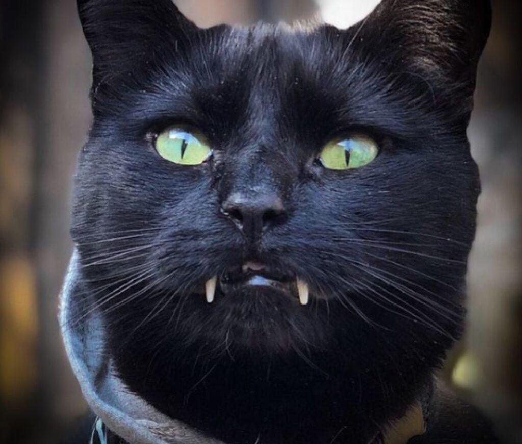 gatto denti sporgenti paura