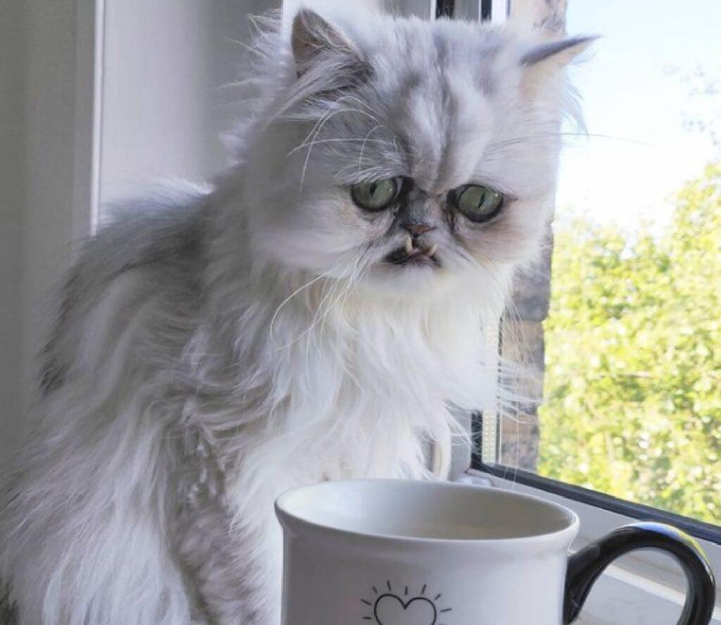 gatto bianco davanti finestra