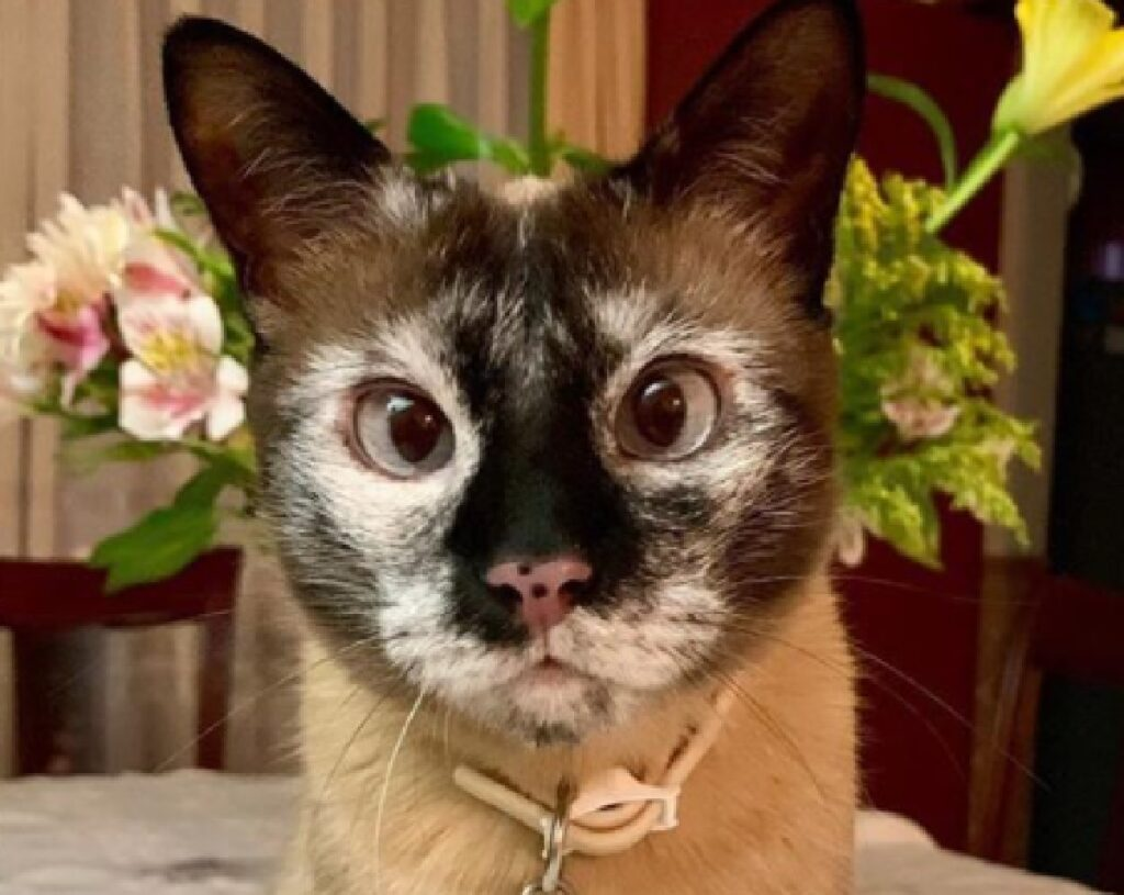 gatto collarino identificativo