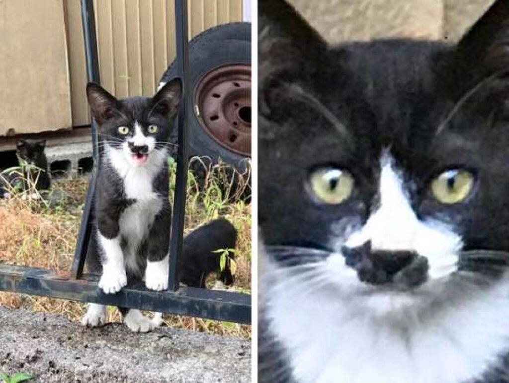 gatto dolce musetto