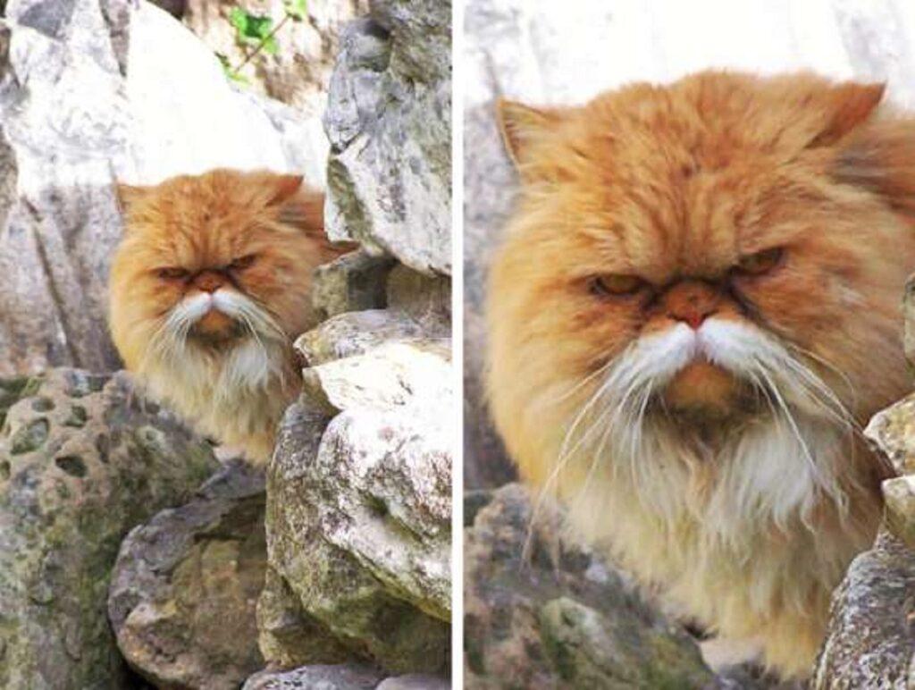 gatto baffi bianchi