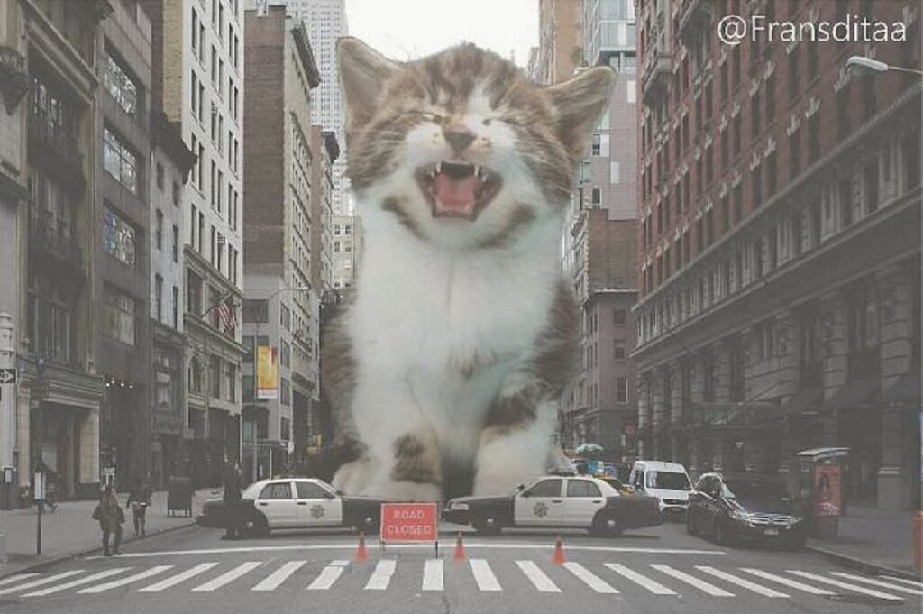 gatto miagola città