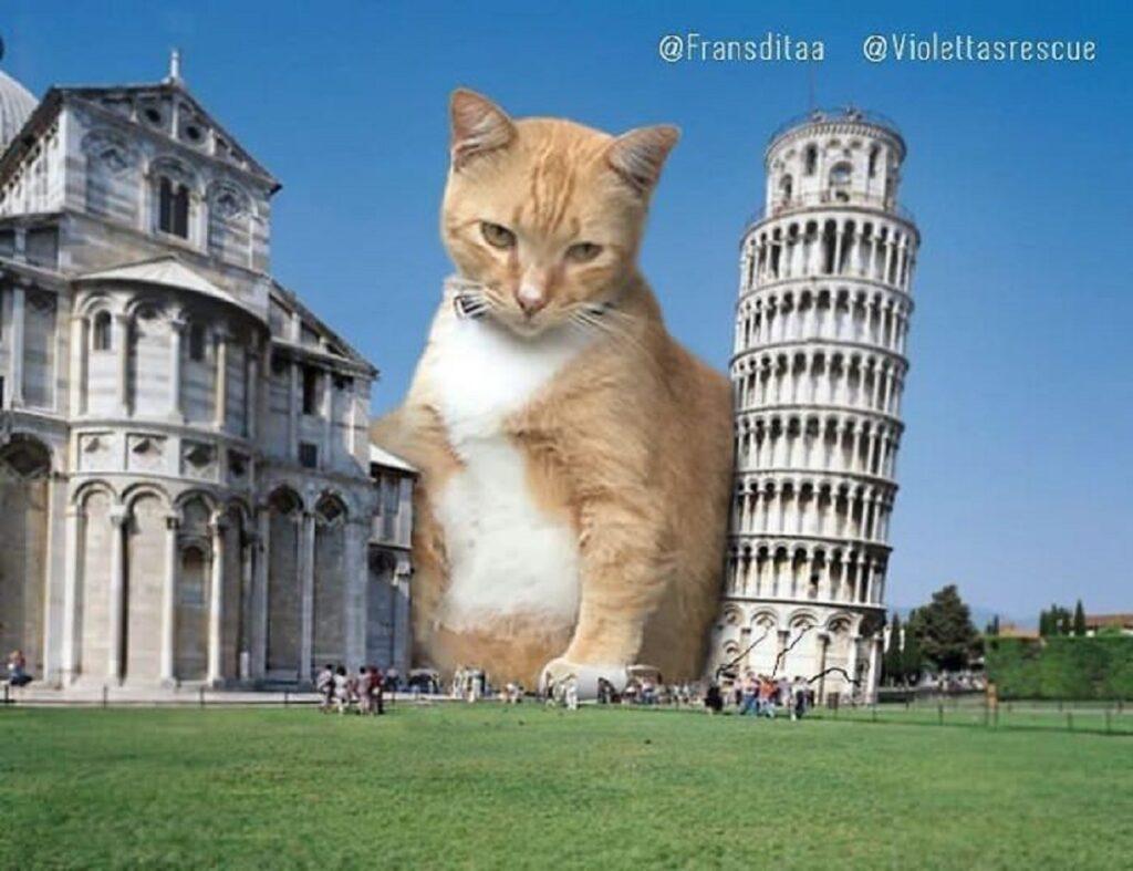 gatto torre pisa