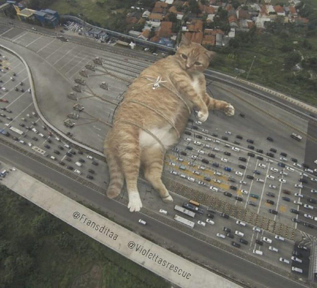 corde gatto strada