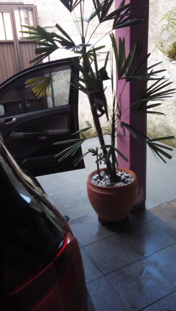 micio arrampica pianta