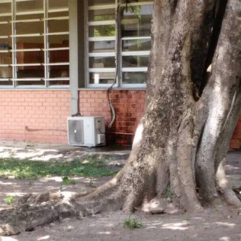 gatto albero giardino