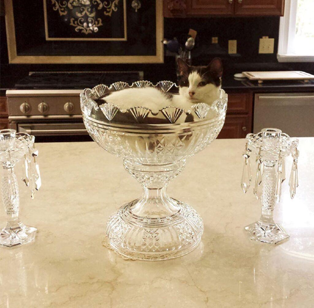 coppa vetro gatto