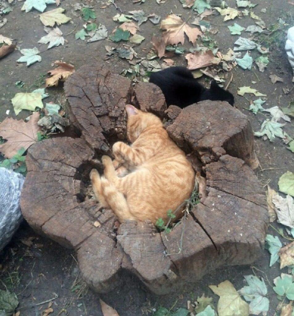 felino tronco albero