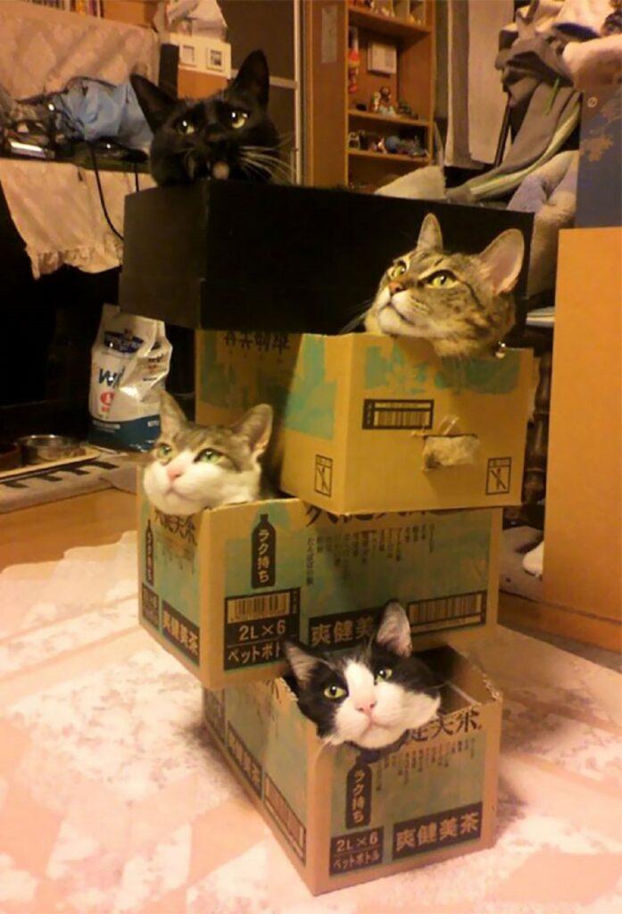 gatti insieme combinazione