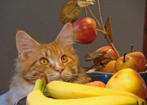gatto micio frutti
