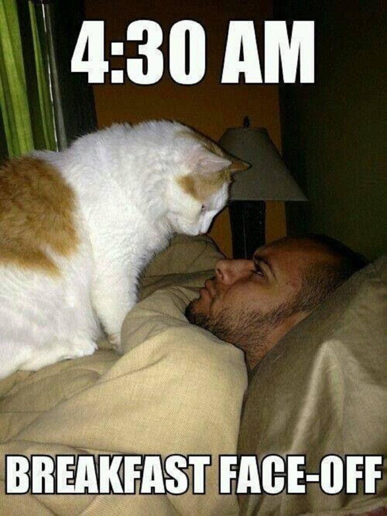 gatto affamato cibo