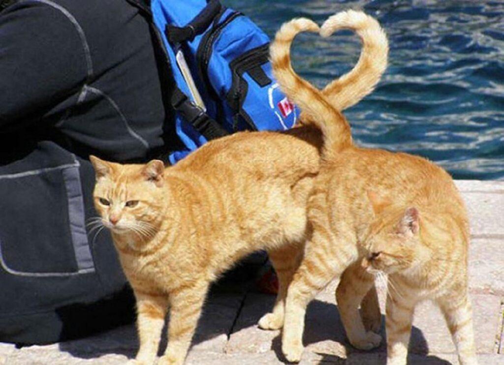 gatti code dolci