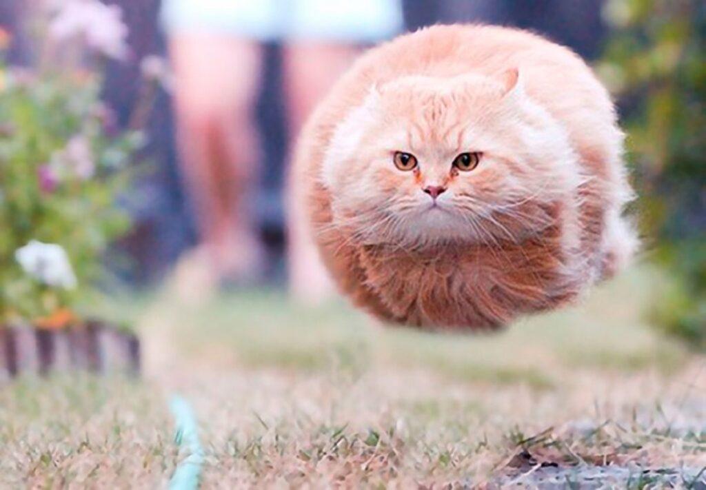 gatto volare zampe