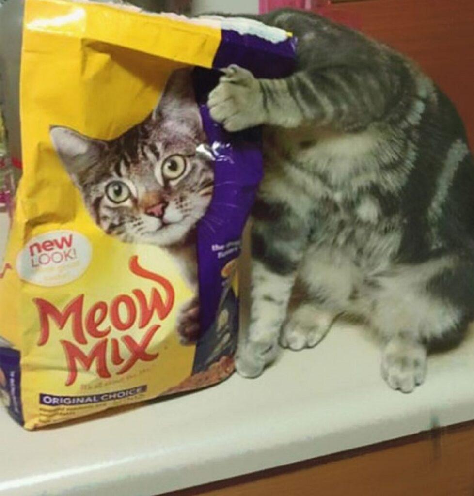 gatto crocchette busta