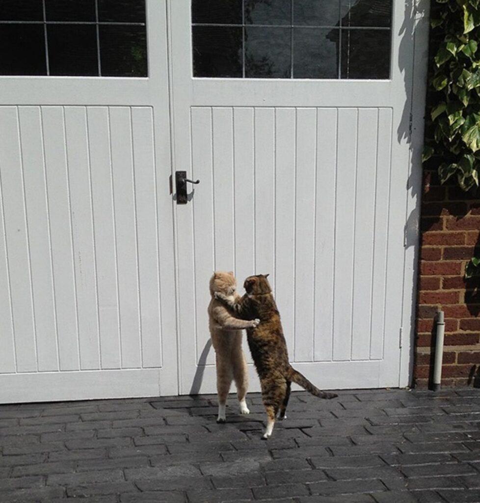 gatti abbraccio ballo