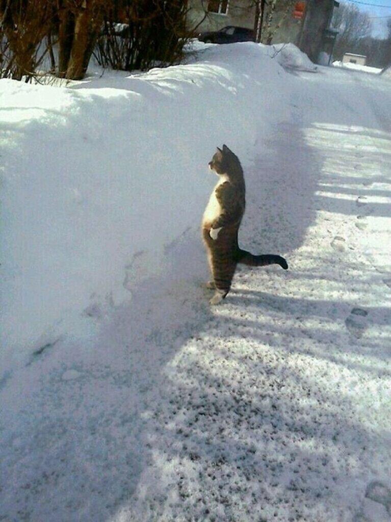 micio neve osserva