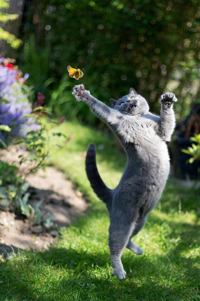 gatto acciuffare farfalla