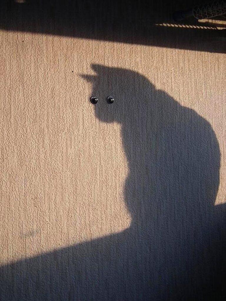 micio ombra occhi