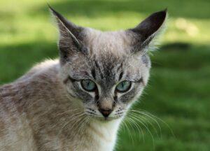 gatti sorpresi con catnip