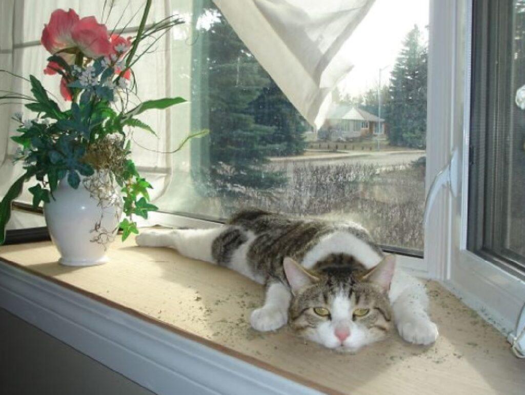 gatto si arrende troppo stanco