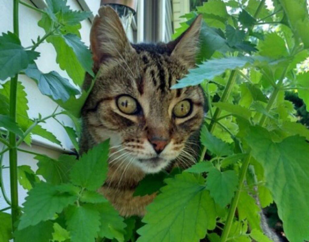 gatto occhi sbarrati indizio