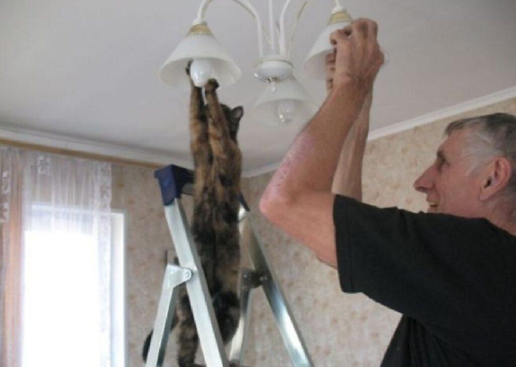 gatto aggiusta tutto casa