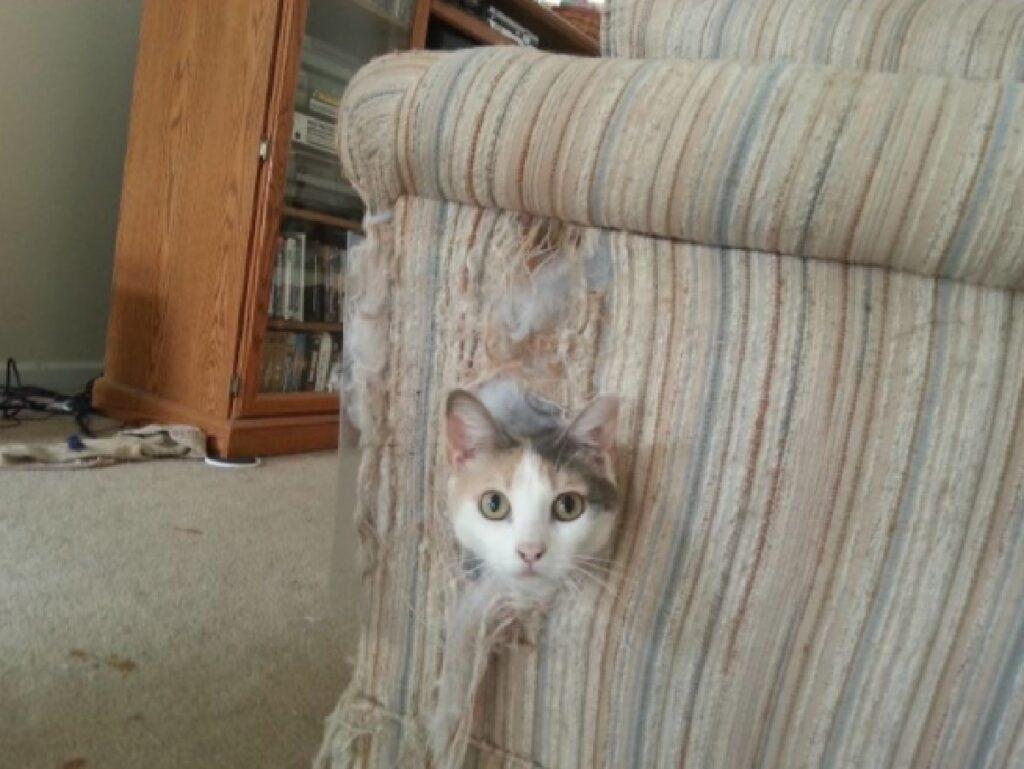 gatto sbuca fuori da poltrona