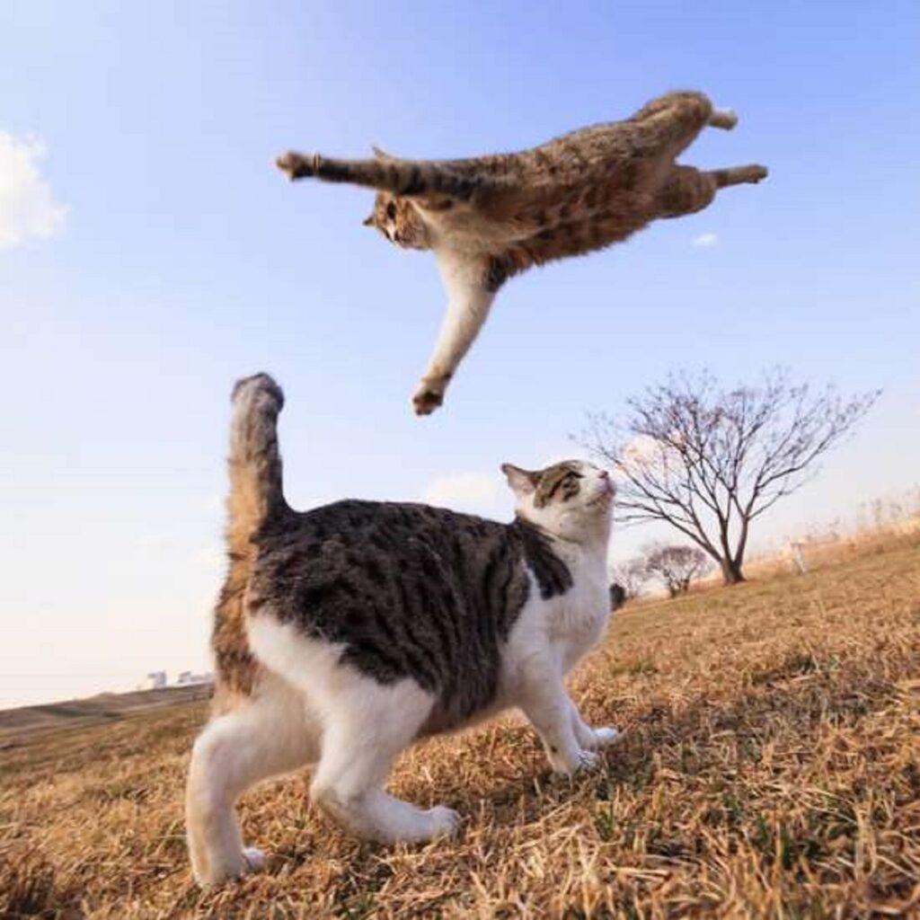 gatti si incontrano