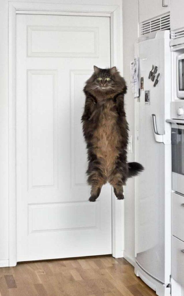 gatto in piedi