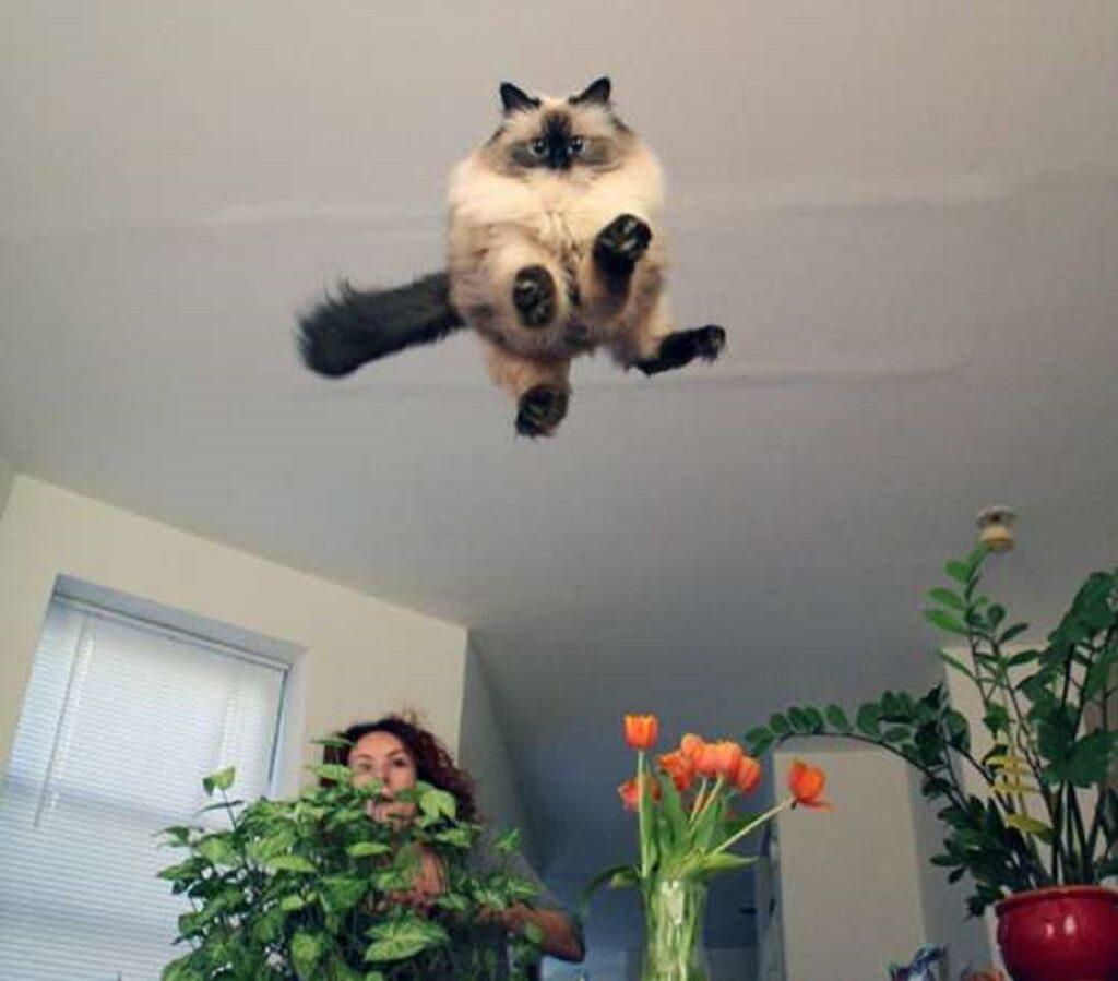 gatto punta telecamera