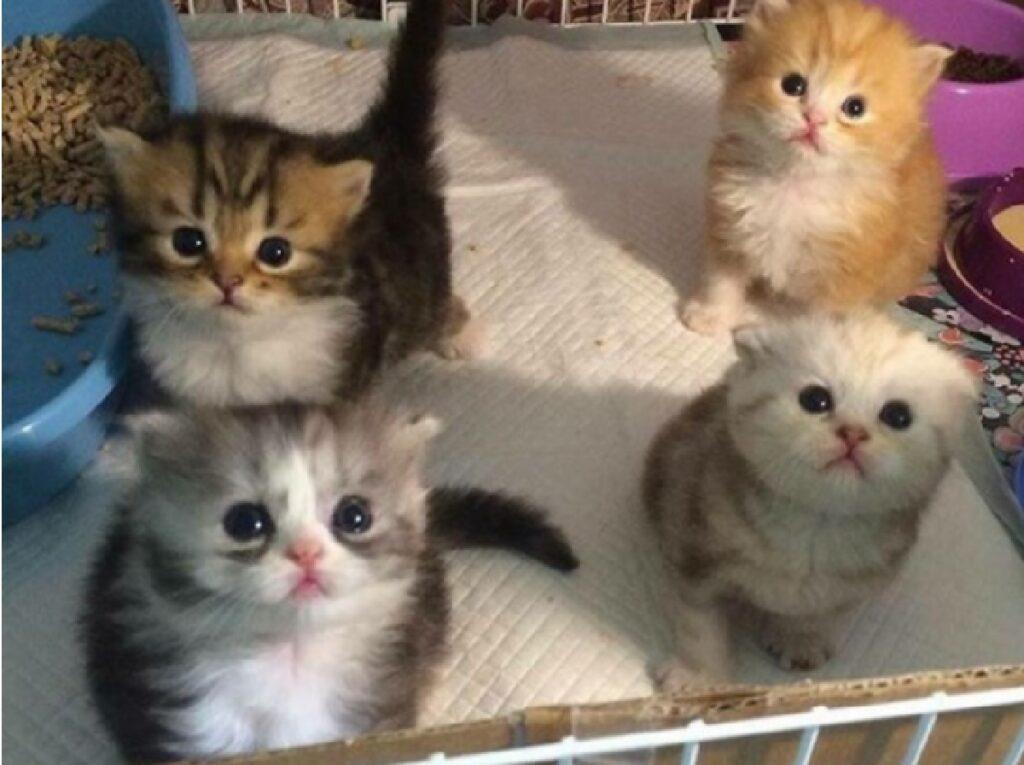 gatti fratelli stessa casa
