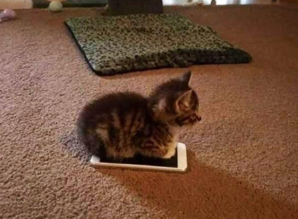 gatto sopra telefonino pavimento