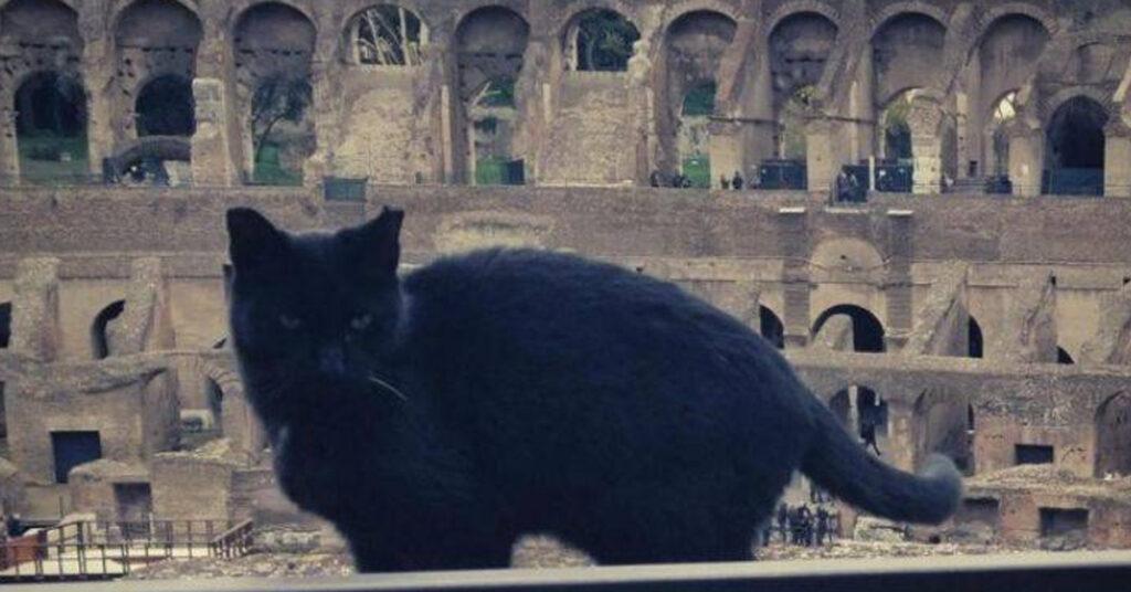 Gatto nero del Colosseo