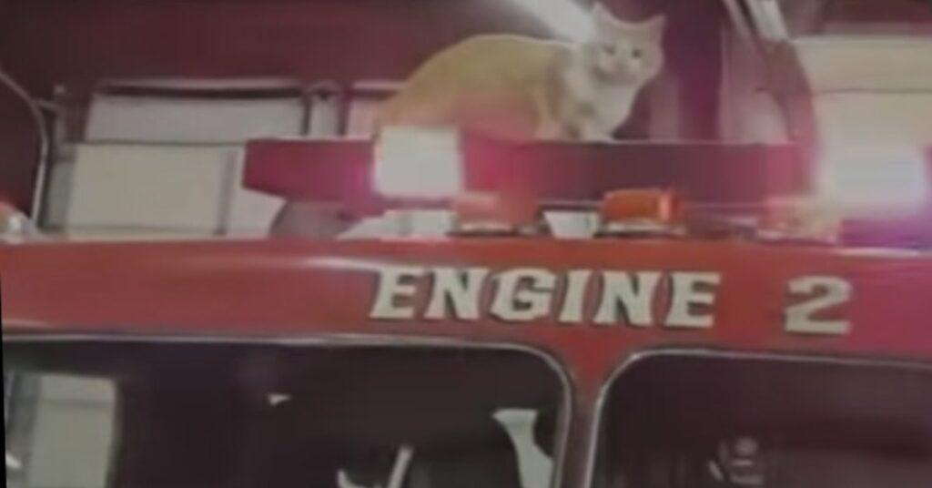 gatto sul camion dei pompieri
